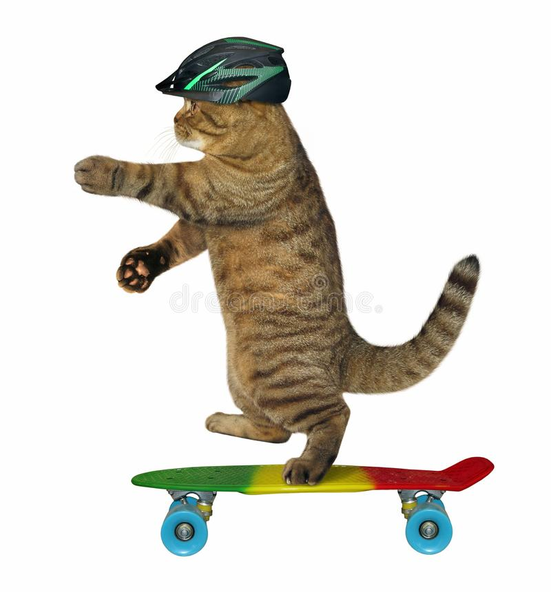 Cat rides a skateboard. The cat in the protective helmet rides a skateboard. White background royalty free stock image