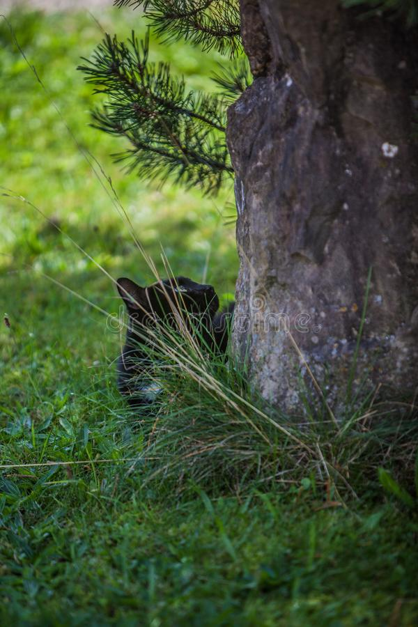 Cat on the prowl. View of a tree trunk in the forest with black cat sitting underneath stock photo