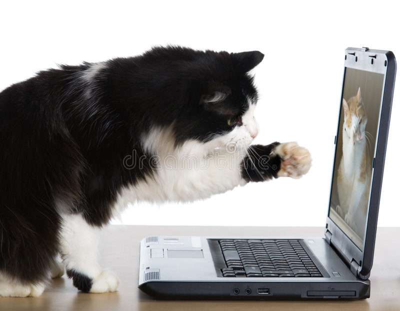 Cat pulls a paw to the laptop stock photography