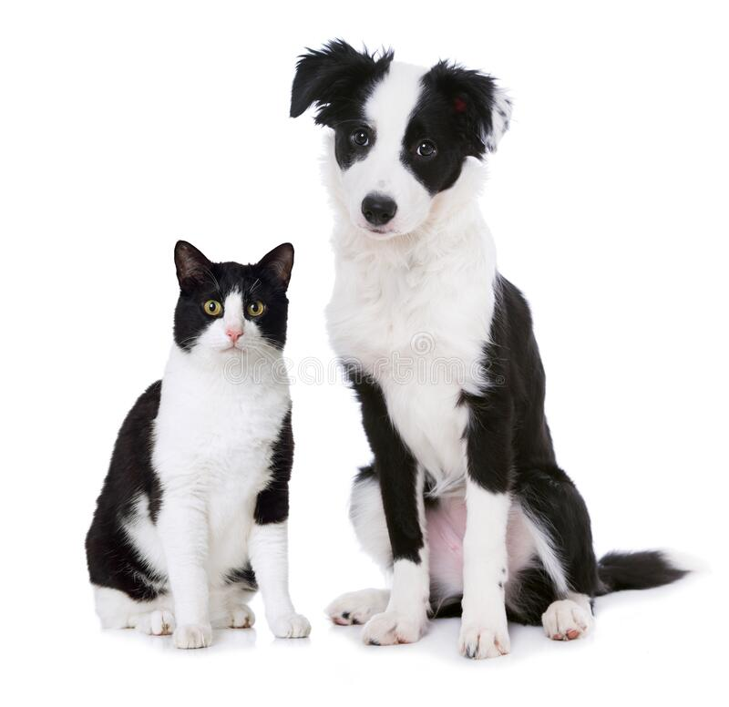 Cat and puppy sitting on white background royalty free stock photo