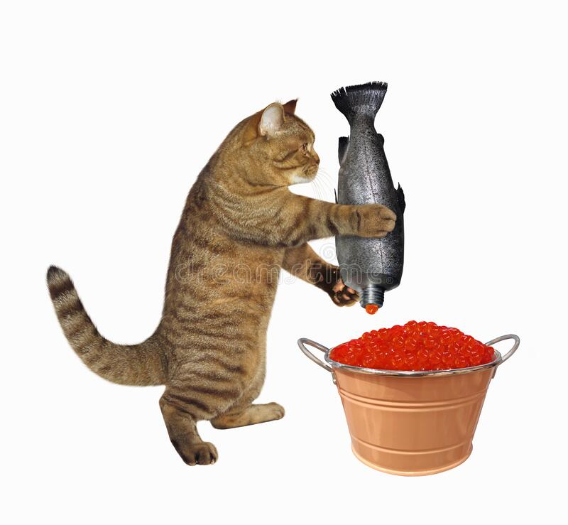 Free Cat Putting Red Caviar In Bucket Royalty Free Stock Photo - 215459895
