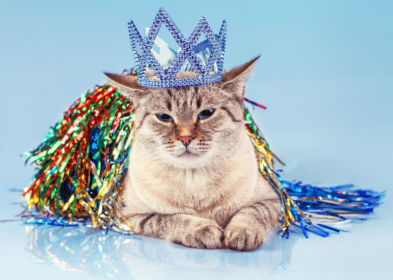 Cat Queen. Cat with Christmas decoration on blue background royalty free stock photo
