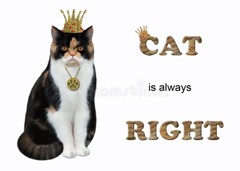 Cat queen is always right. The cat queen is wearing a crown and a medallion. Cat is always right. White background. Isolated royalty free stock photography