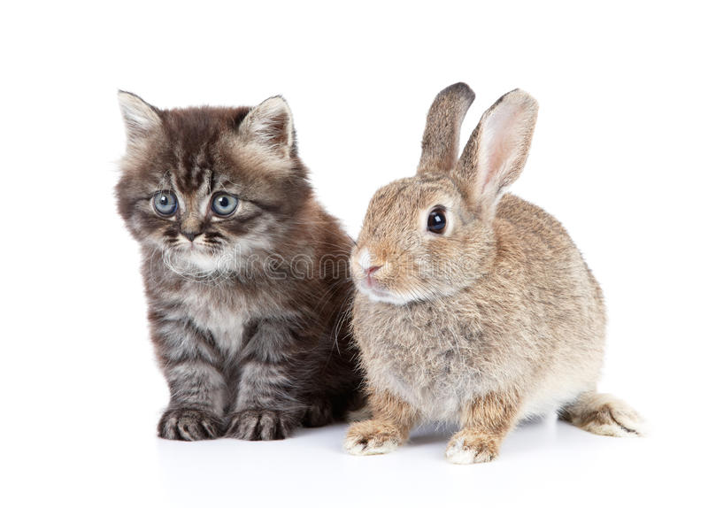 Cat and rabbit. Isolated on white background