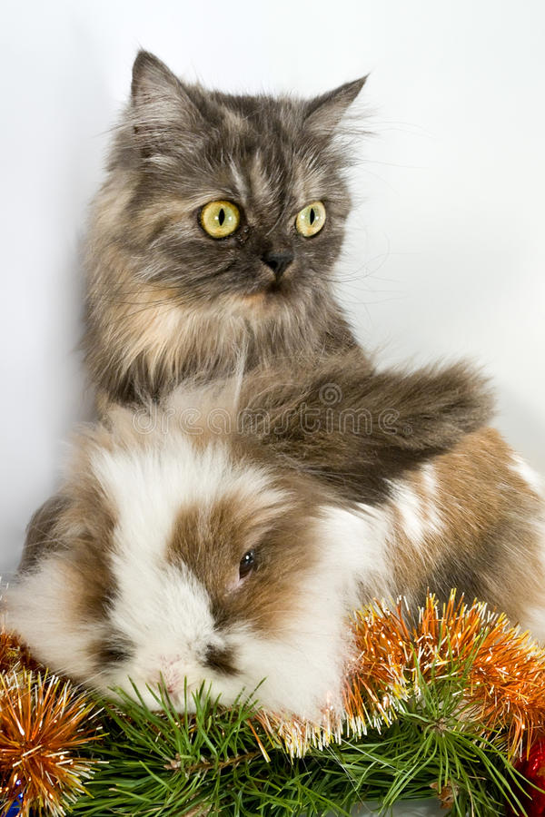 Cat and rabbit. Cat and a rabbit - the symbols of the new 2011 year royalty free stock photo