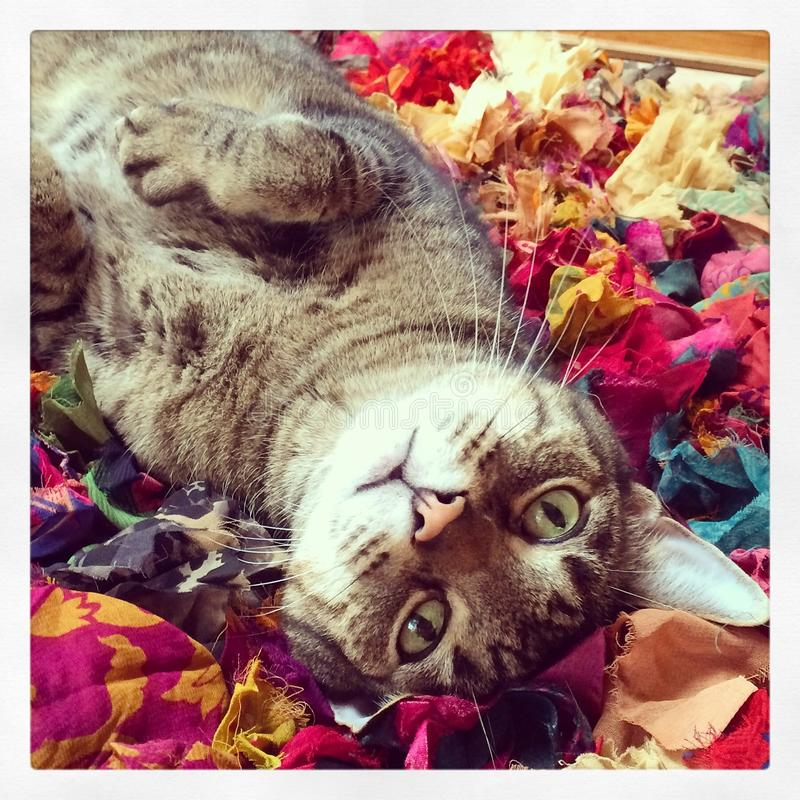 Cat on rag rug stock images