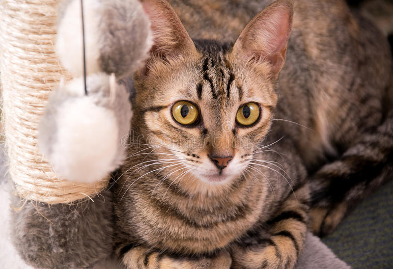 Cat rasting royalty free stock photo