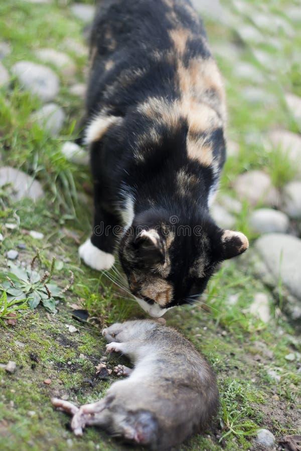 Download Cat With A Rat Stock Photos - Image: 21336753