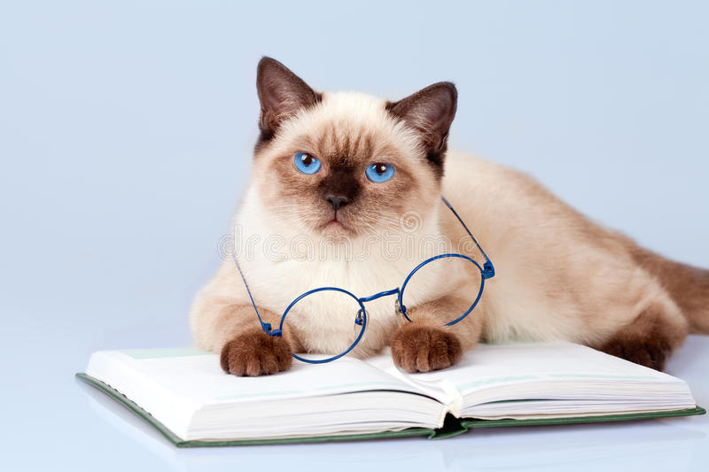 Cat reader royalty free stock image