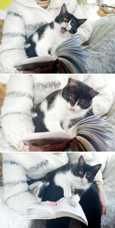Cat Reading Book Stock Photo