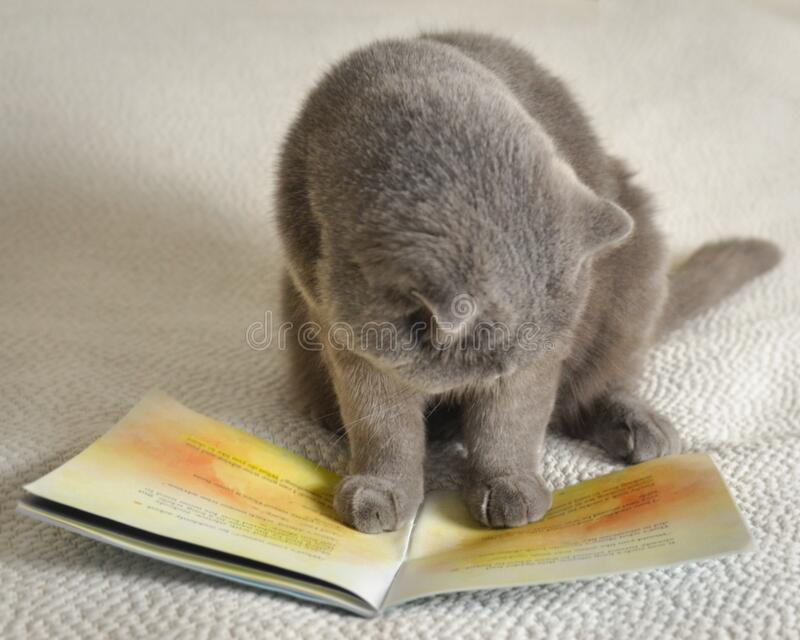 A cat reading a book stock images
