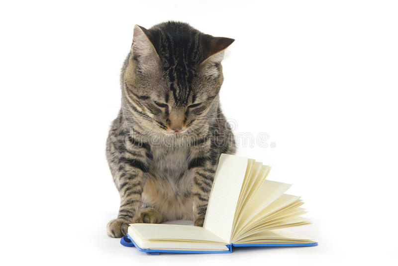 Cat reading a notebook royalty free stock photography