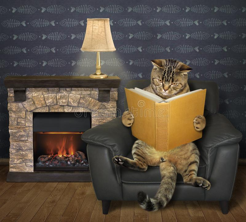 Cat reads a book near a fireplace royalty free stock images