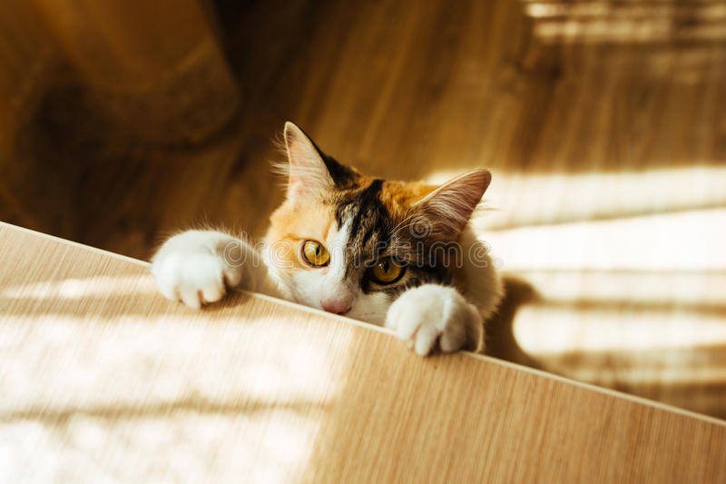 Cat is ready for jumping. Warm toning image. Lifestyle pet concept. stock photo