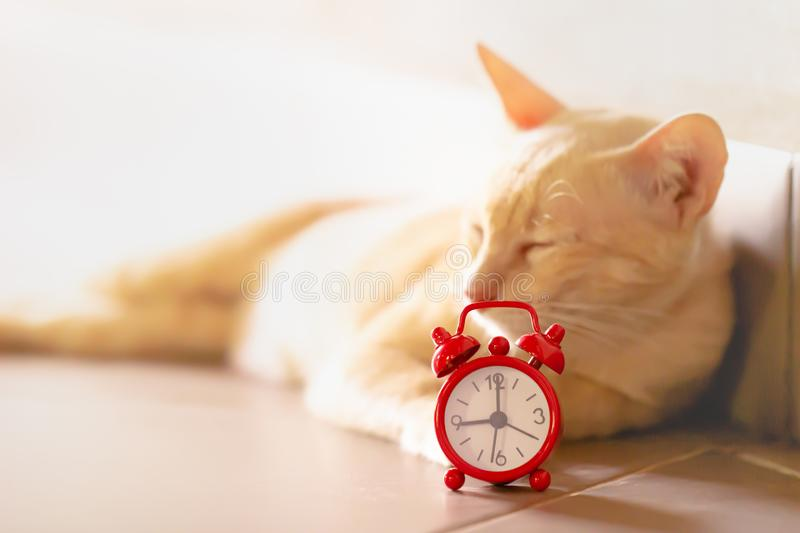 Cat and red alarm clock. royalty free stock images