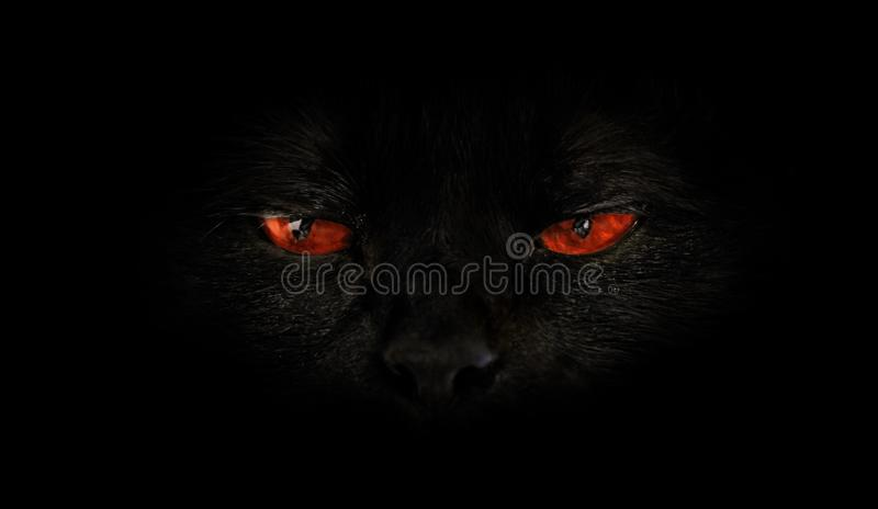 Cat red evil eyes. Black cat with red evil eyes on black background. Horror atmospheres and halloween concept. Look panther and witch eyes. Bad luck and royalty free stock image