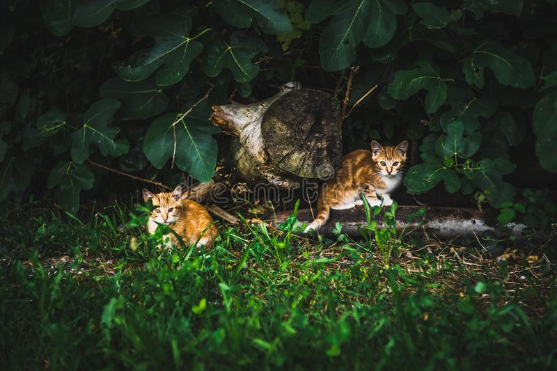 Cat red family mother and sons stock photos