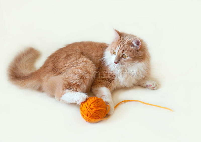 Cat, red and fluffy stock image