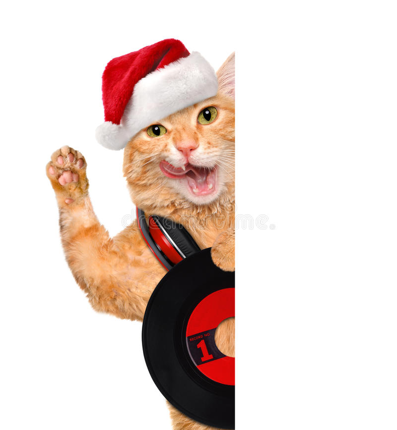 Cat in red hat holds a vinyl record . royalty free stock images