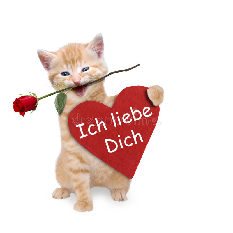 Cat with a red rose and red heart. I love you stock photography