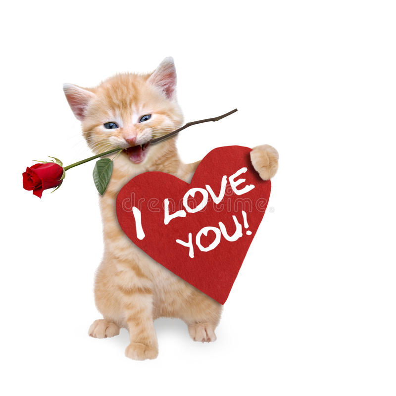 Cat with a red rose and red heart. Ilove you stock image