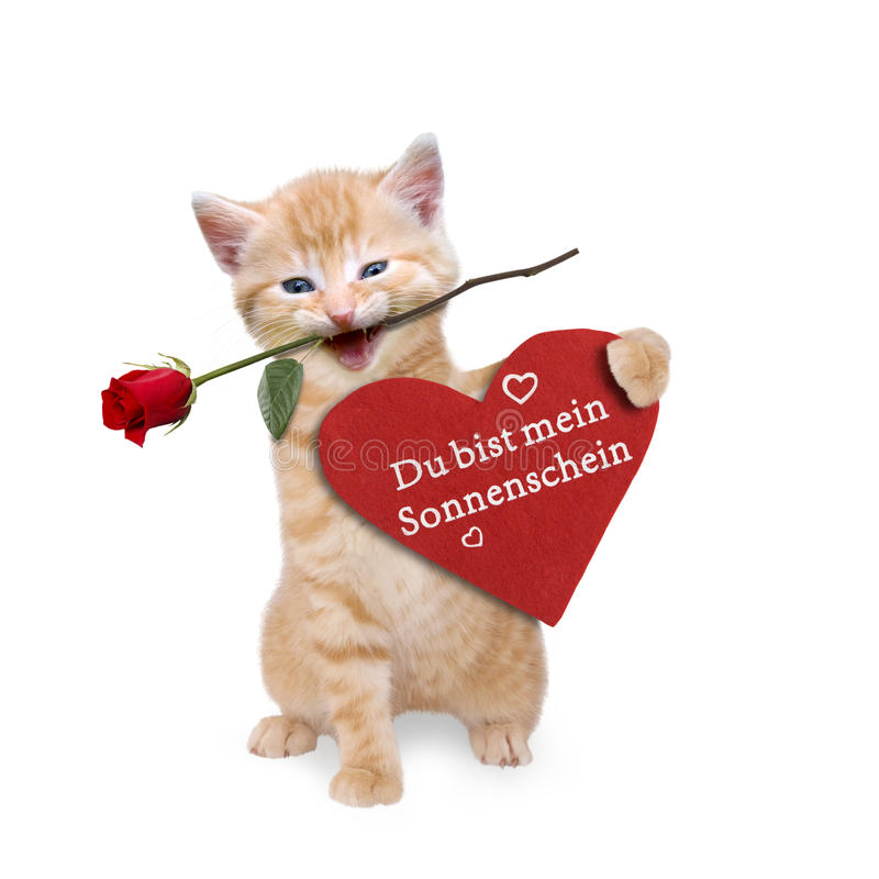 Cat with a red rose and red heart. On white background stock images