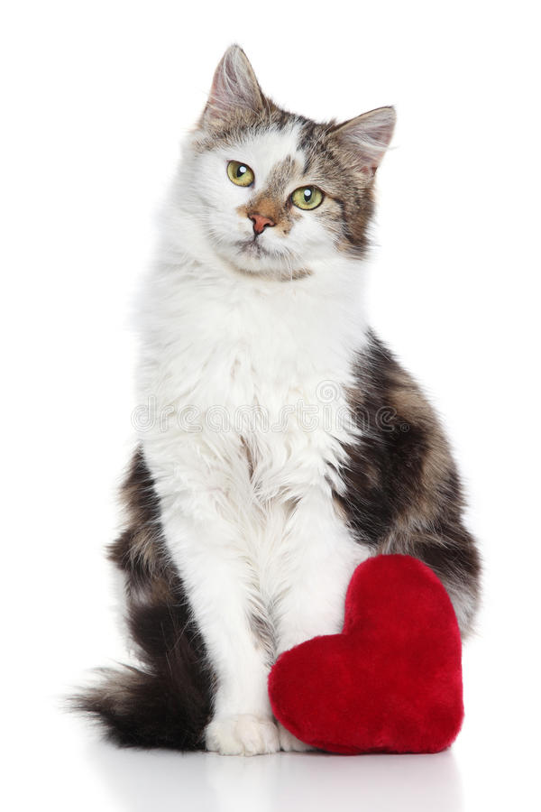 Download Cat With Red Valentine Heart Stock Image - Image: 28862669