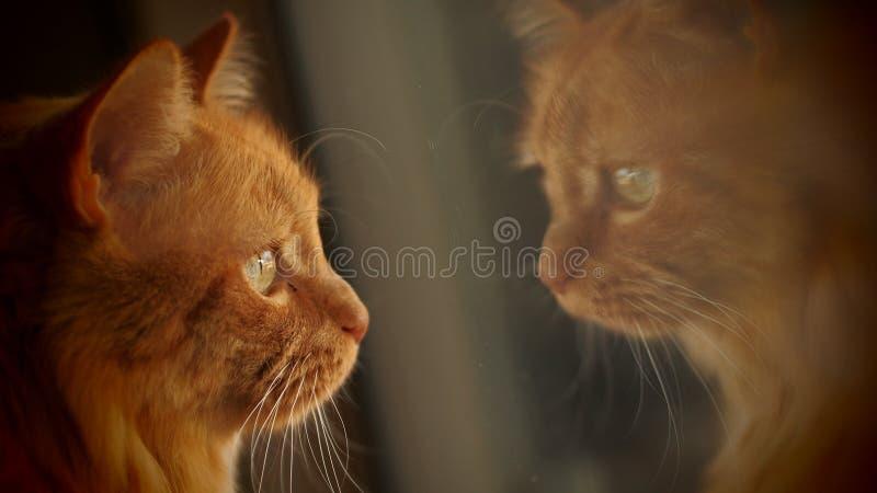 Cat Reflections fotografia de stock