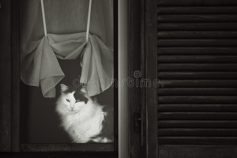 Cat in relax. Beautiful cat in relax in b&w stock photos
