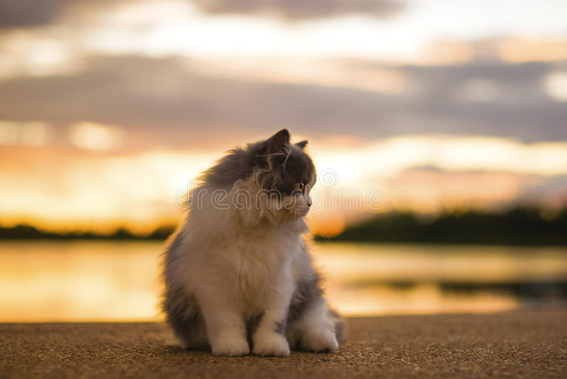 Cat relax. At sunset reservoir stock photo