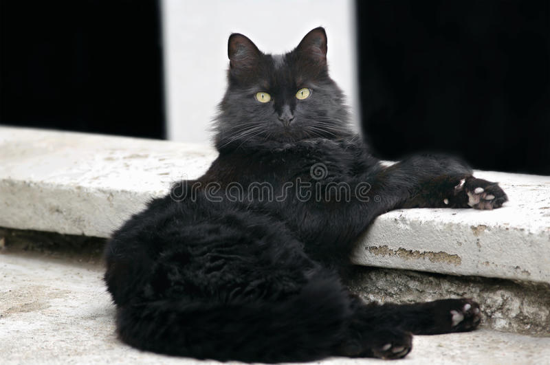 Cat relaxes. In comfortable stretched position stock photos