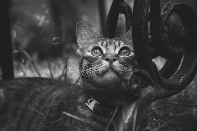 cat relaxing in black and stock photo