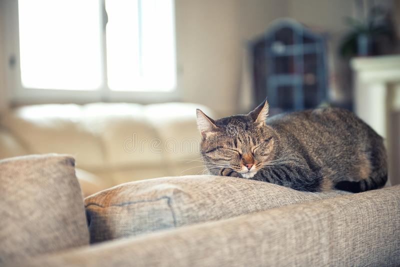 Cat relaxing on couch royalty free stock image