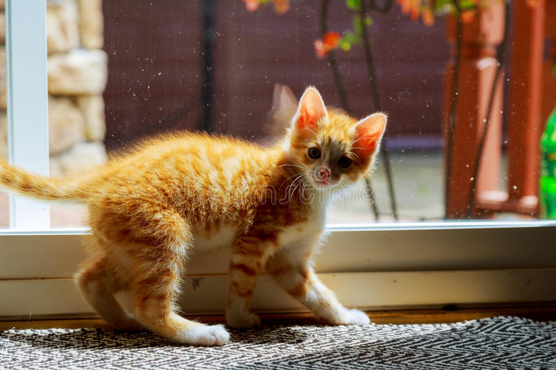 Cat relaxing and door royalty free stock image