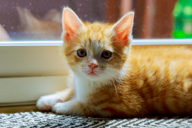 Cat relaxing and door stock photo