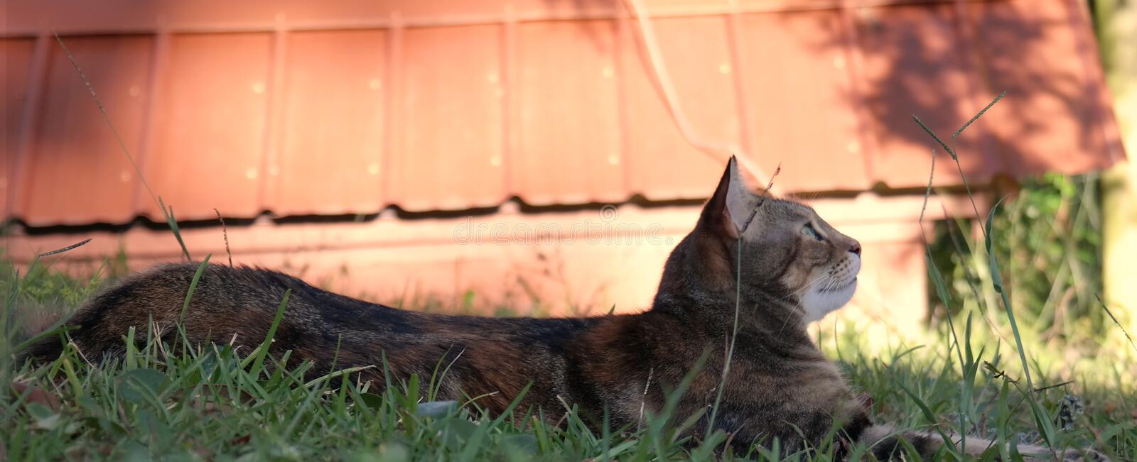 Cat relaxing in grass royalty free stock photo