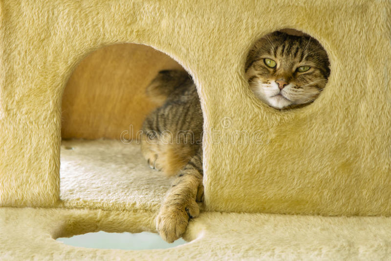 Cat Relaxing with Head Through Window stock photos