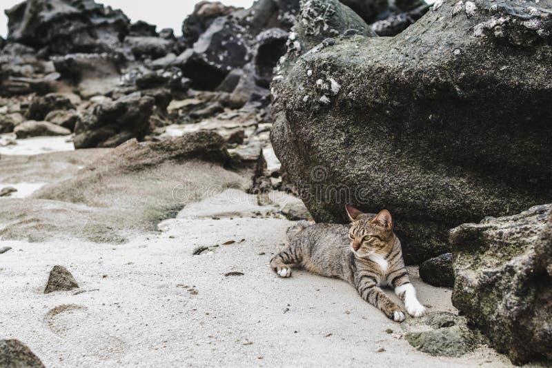 Cat Relaxing Near Phi Phi-Inseln in Thailand lizenzfreie stockbilder