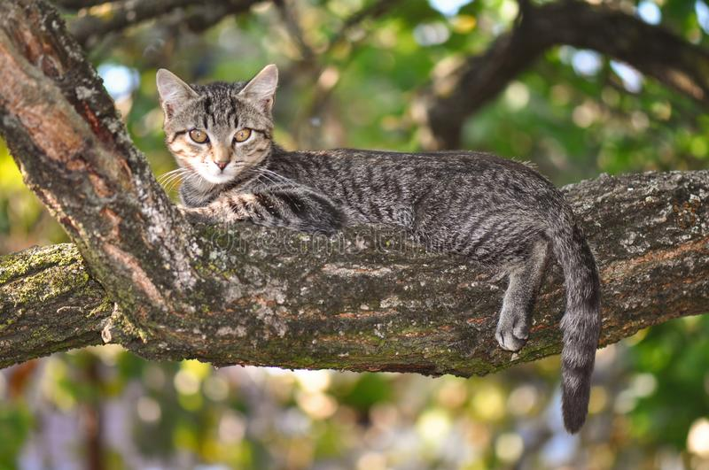 Cat relaxing. Stray cat relaxing on a tree royalty free stock images