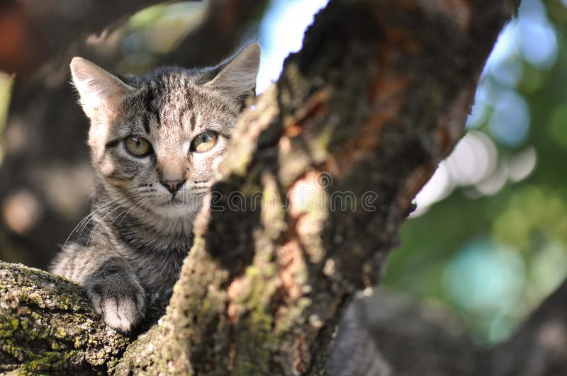 Cat relaxing. Stray cat relaxing on a tree royalty free stock photography
