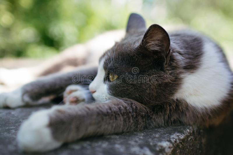 Cat relaxing tired lazy outdoors close up daylight. Selective focus stock images