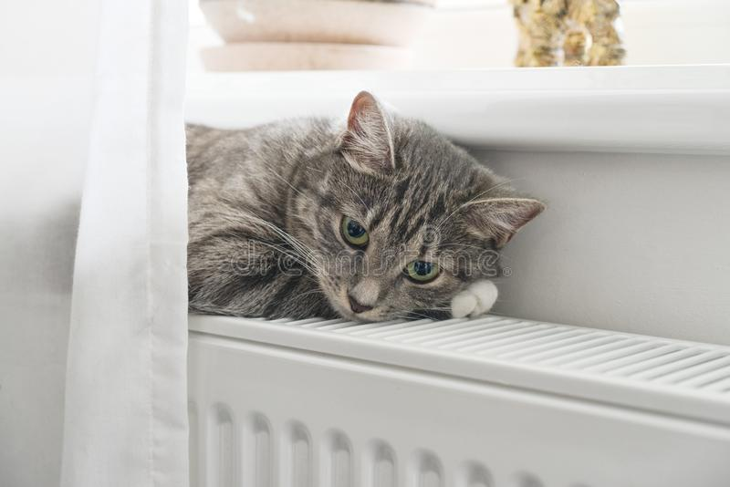 Cat relaxing on the warm radiator stock photo