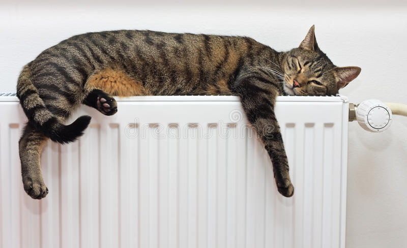 Cat relaxing on a warm radiator. A tiger (tabby) cat relaxing on a warm radiator royalty free stock photo