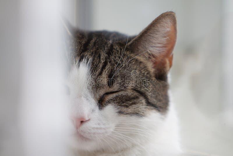 Cat Resting foto de stock