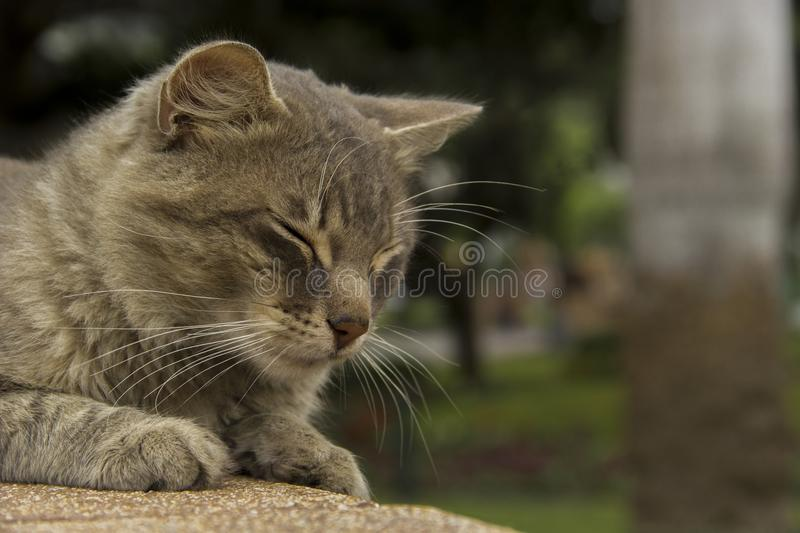 Cat. Resting in the ark royalty free stock photography