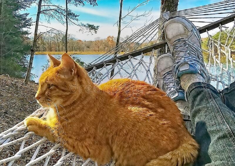 Cat Resting in a Hammock royalty free stock image