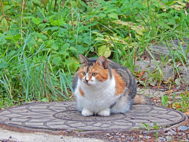 A cat resting on a manhole cover royalty free stock images