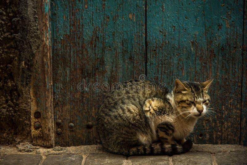 Cat resting beside old wooden door in Morocco.  stock photo