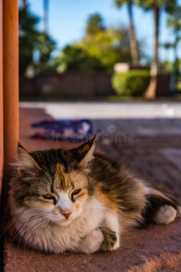 Cat resting beside red painted wall in Morocco.  stock photography