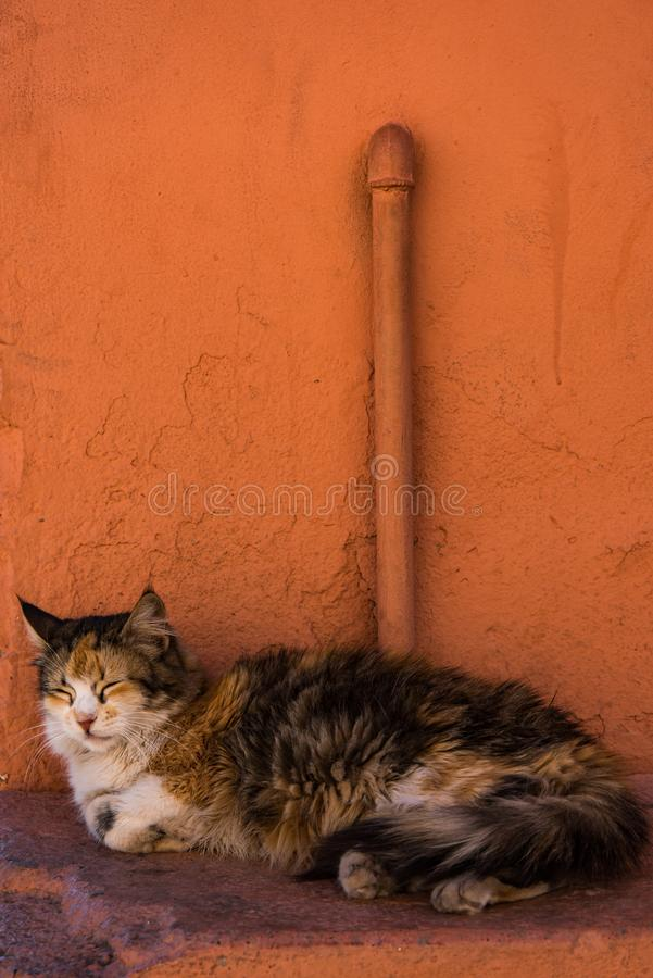 Cat resting beside red painted wall in Morocco.  royalty free stock photos